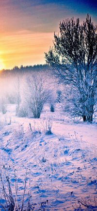 Winter Wallpaper Cute