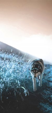 Cool Wolf Wallpaper 14