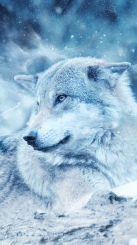 White Wolf Wallpaper 4