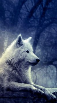 White Wolf Wallpaper