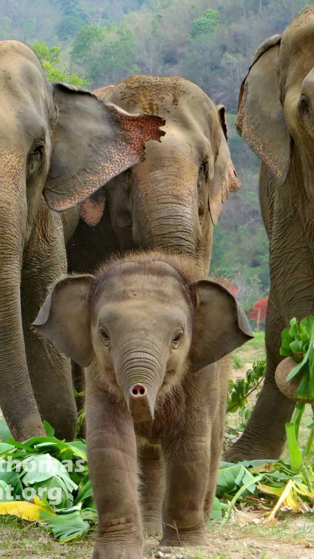 iphone baby elephant wallpaper