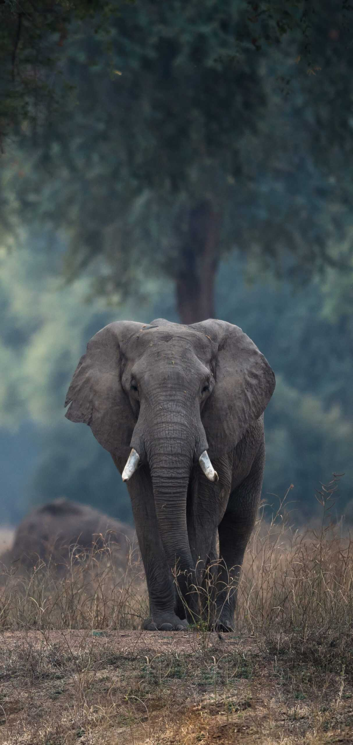 iPhone Elephant Wallpaper   KoLPaPer   Awesome Free HD Wallpapers