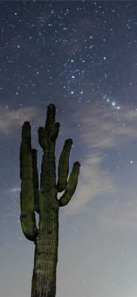 Cactus Wallpaper Android 3