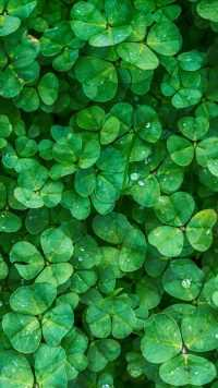 Shamrock Lock Screen 4