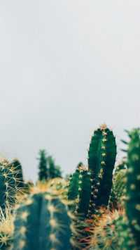 iPhone Cactus Wallpaper 4